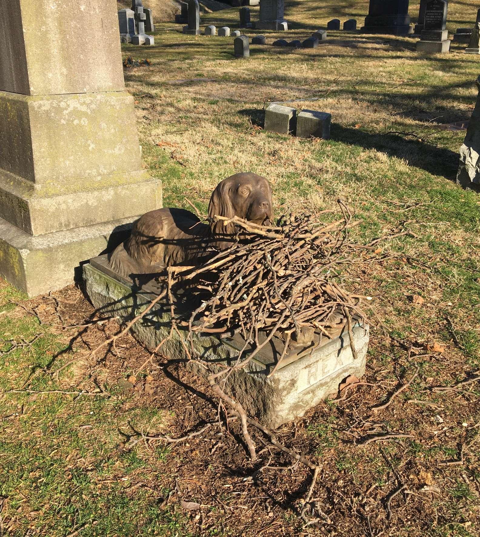 Rex il cucciolo da guardia al cimitero