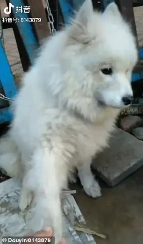 Cucciolo legato fuori dalla macelleria