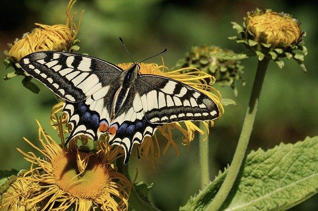 come nascono le farfalle magia