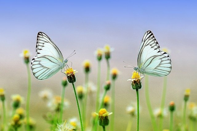 come nascono le farfalle