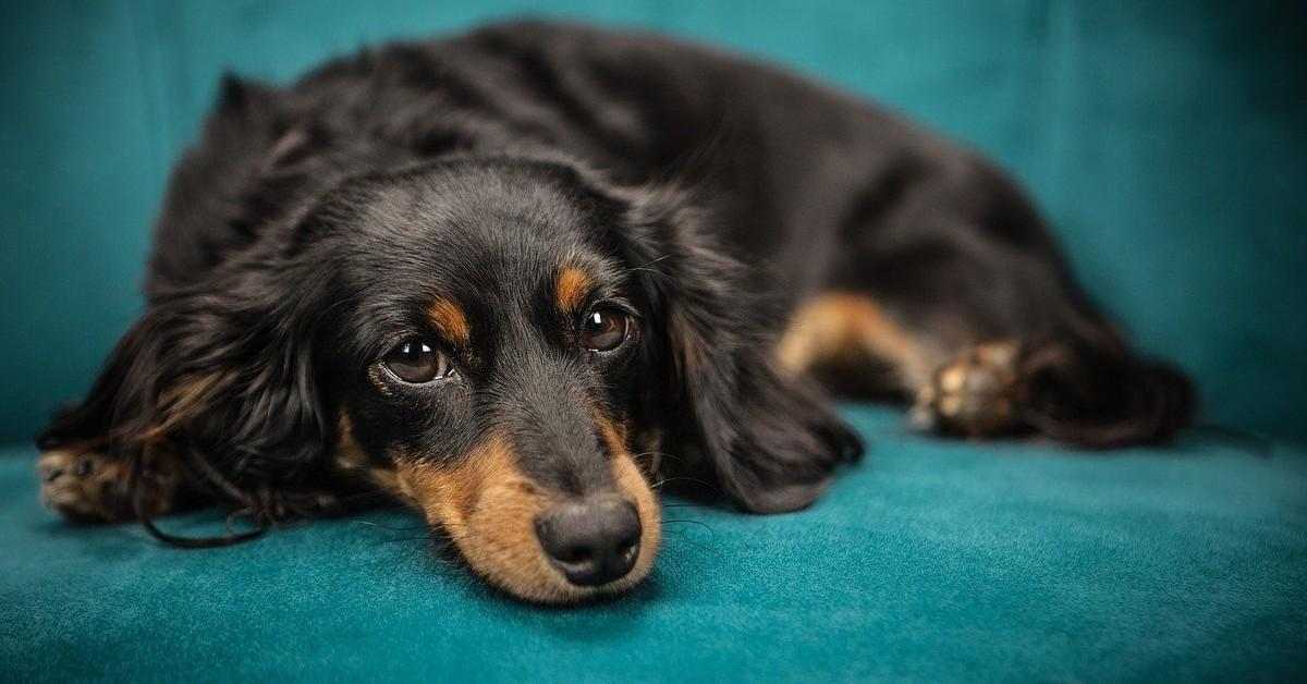 consigli su come pulire la pipì del cane dal divano