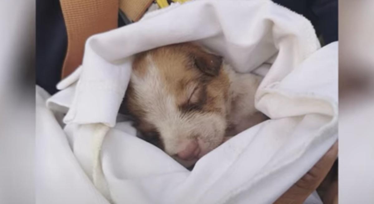 Il cucciolo nel cassonetto