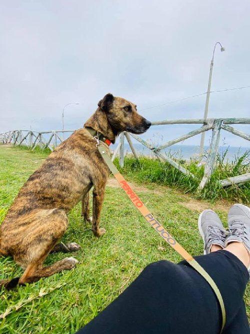 Rupert fuori dal rifugio Voz Animal de Peru