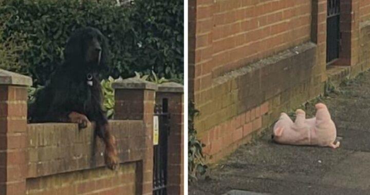donna ha aiutato cane peluche