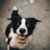 errori-da-evitare-con-il-cane