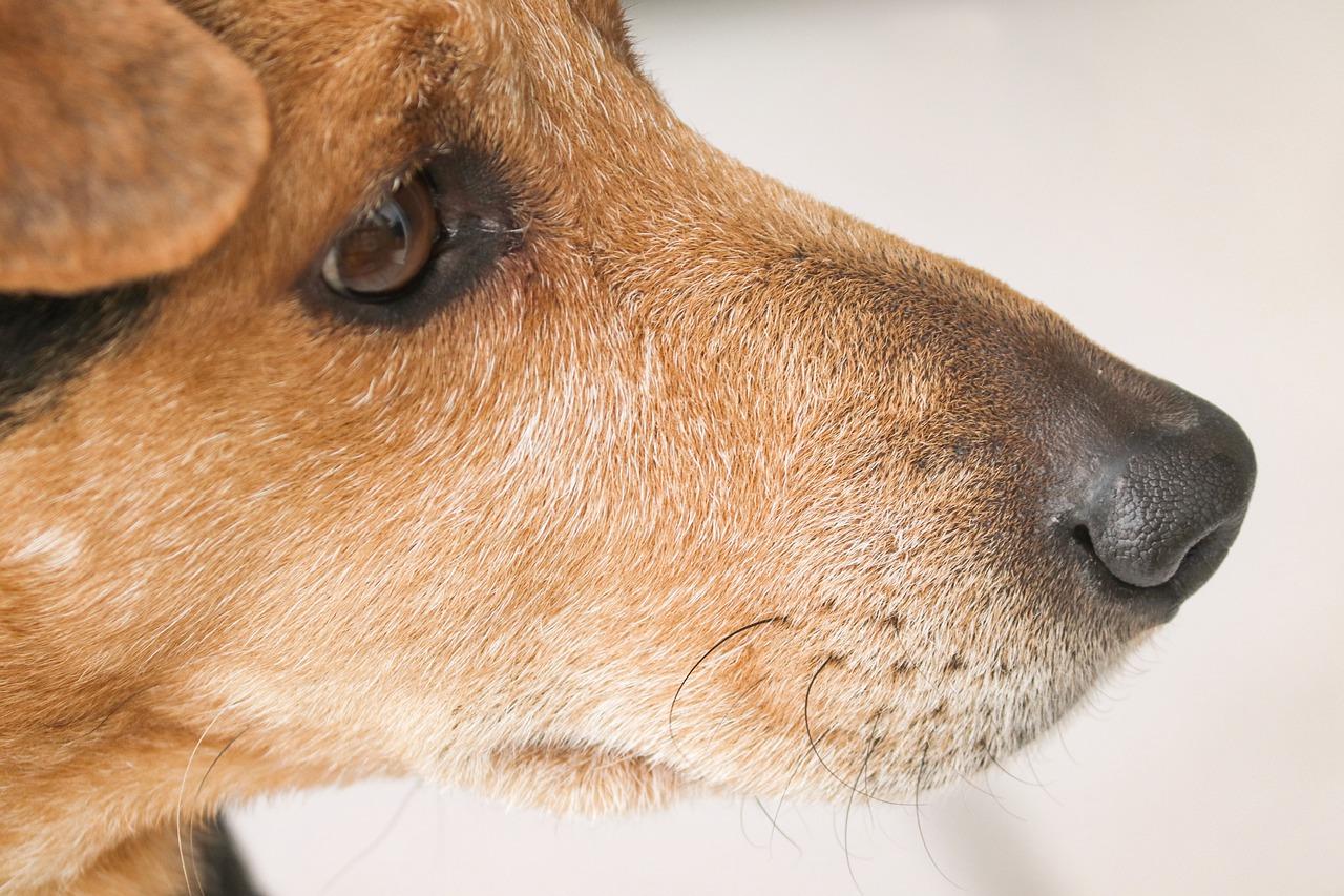 Cane smarrito 3 anni prima