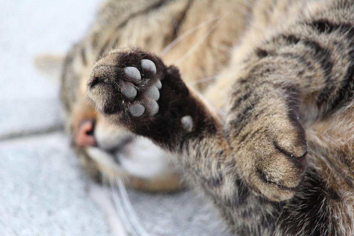 denunciato il proprietario di un gatto