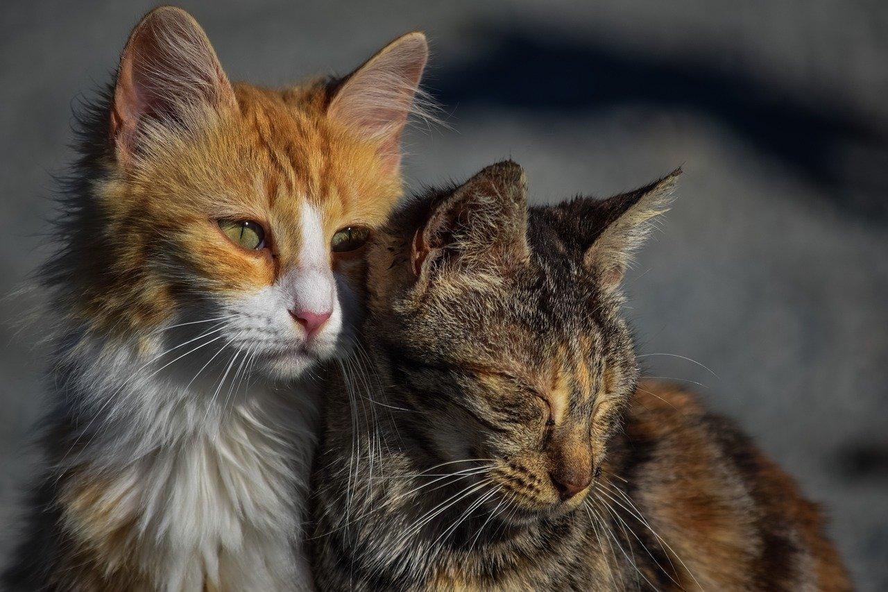 Gatti maltrattati in strada