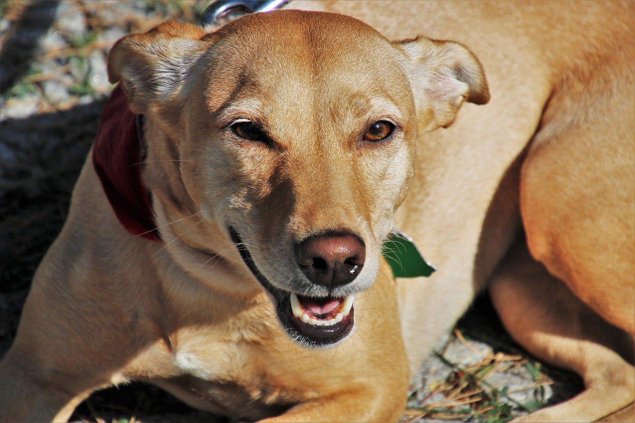 cane salva cucciolo dall'alluvione