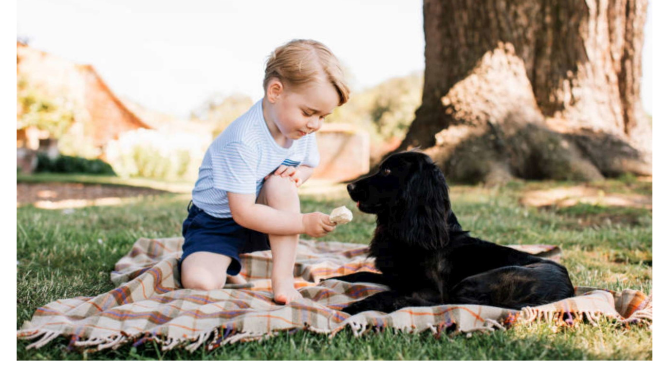 Il Principe George e il Cocker Spaniel