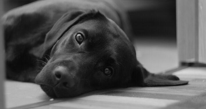 Ritratto del cane morto