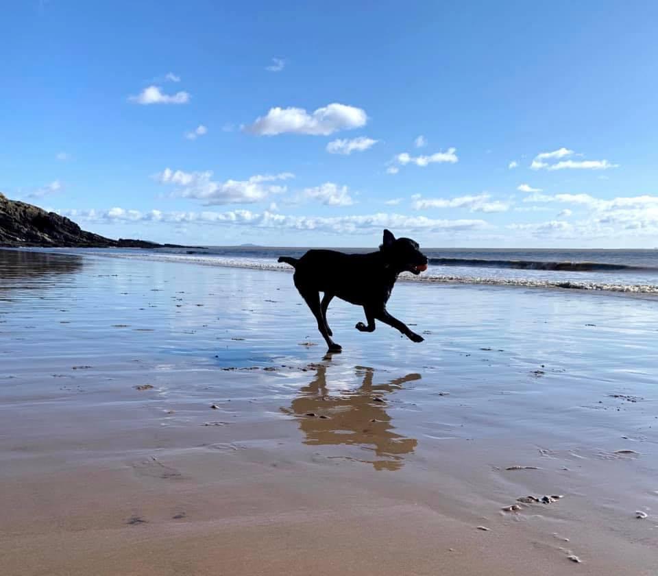 Smiff corre sulla spiaggia