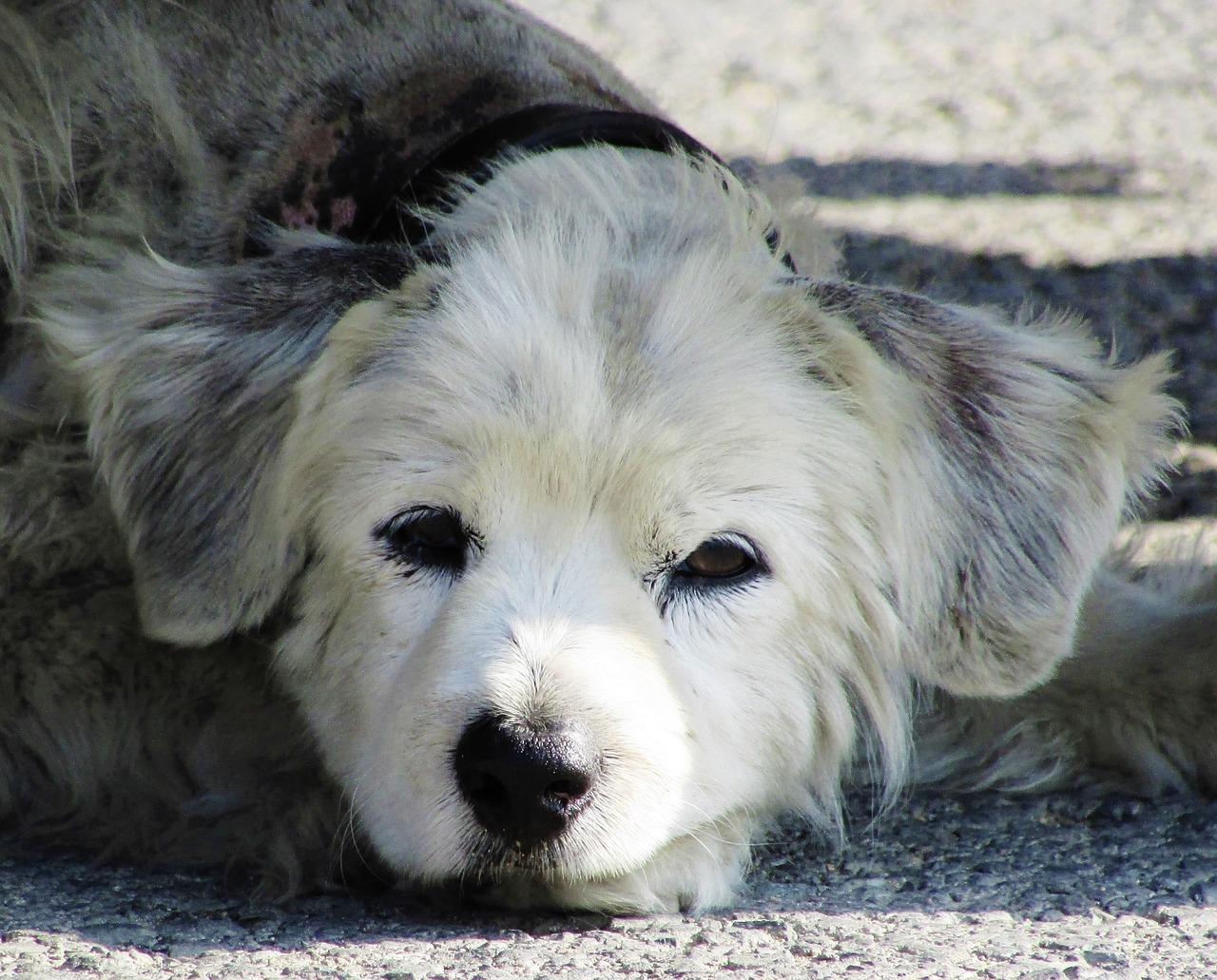 Cucciolo abbandonato in strada