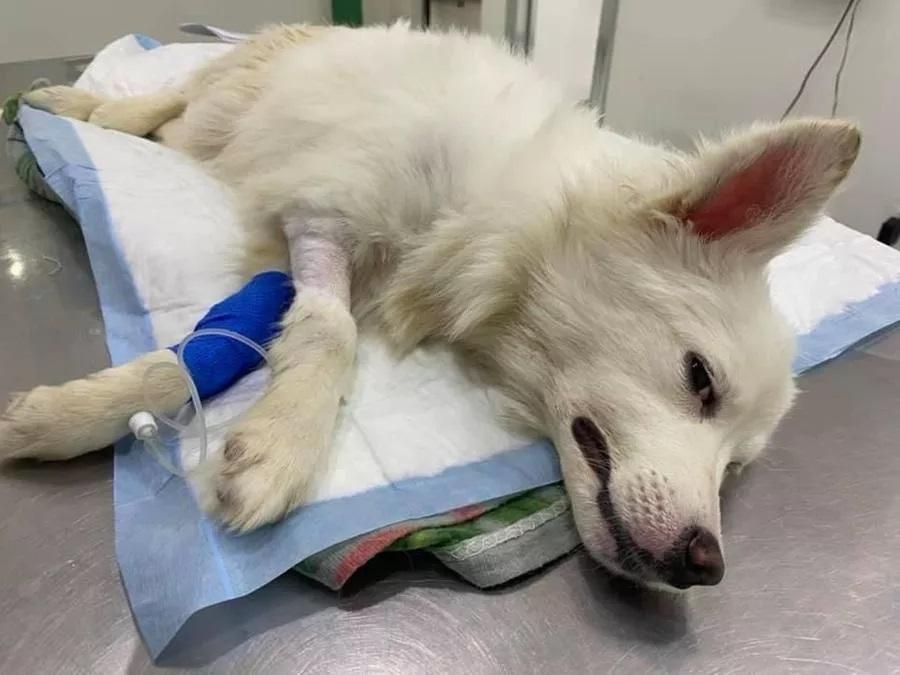 Cane salvato e curato dal veterinario