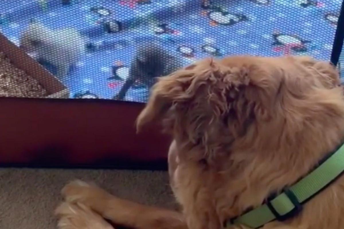 Leo, il cane che salva i gattini