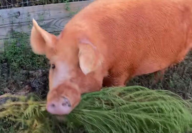 La nuova casa dell'animale salvato