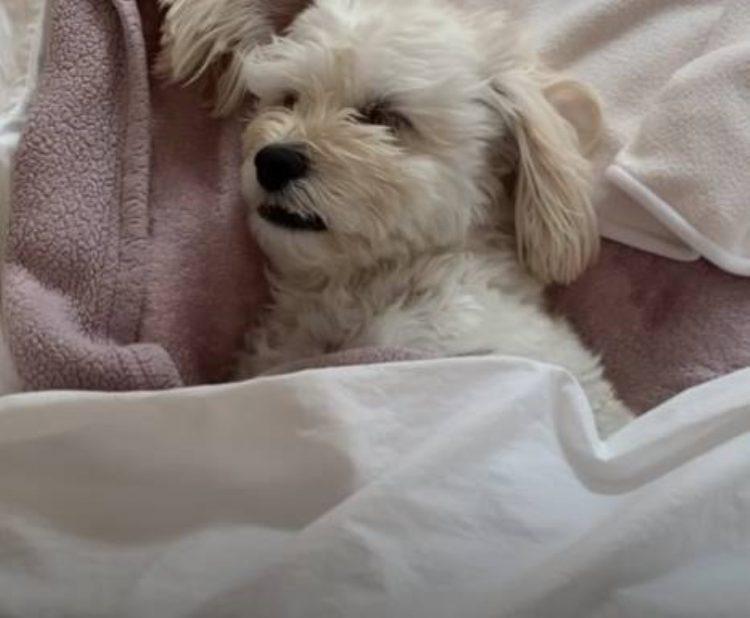 Cucciolo non riesce ad addormentarsi