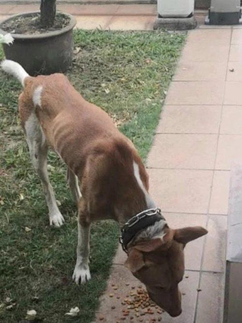 Dare del cibo al cane