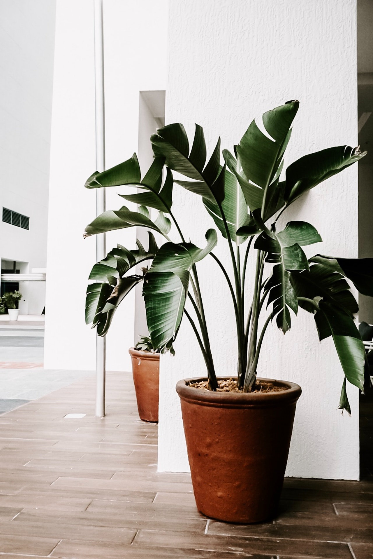 pianta-grande-arredo