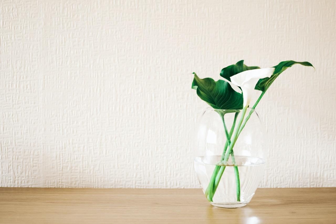 pianta-vaso