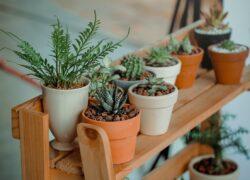 arredare-con-le-piante-piante-grasse-mensole