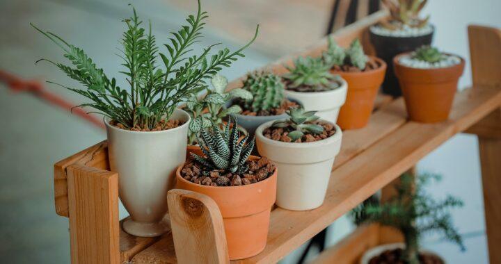 Arredare con le piante: tutte le alleate verdi per decorare la nostra casa