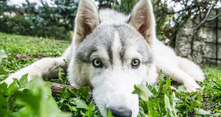 Salvare un cucciolo dall'incendio