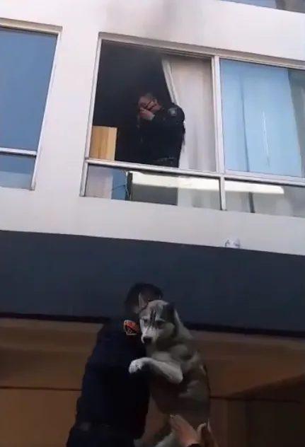 Il salvataggio del cane in difficoltà