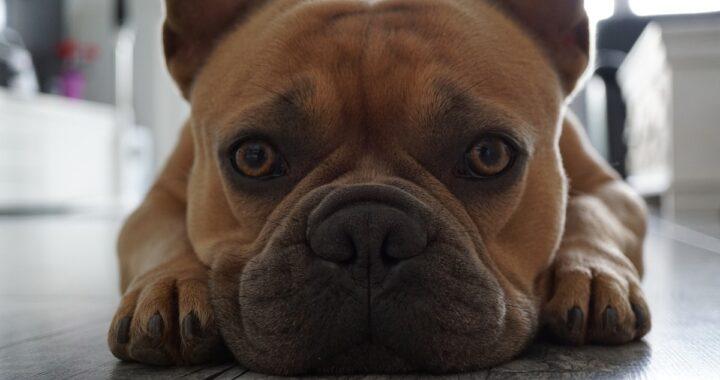 7 problemi della pelle comuni nei cani e come trattarli