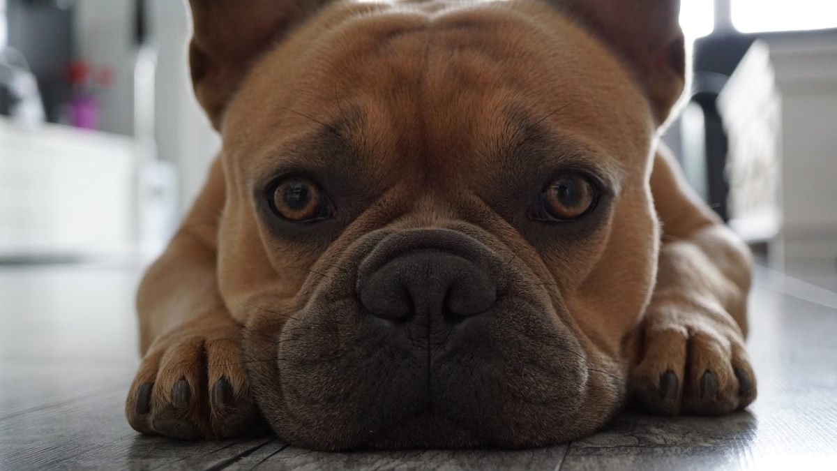 I 7 comuni problemi della pelle nei cani