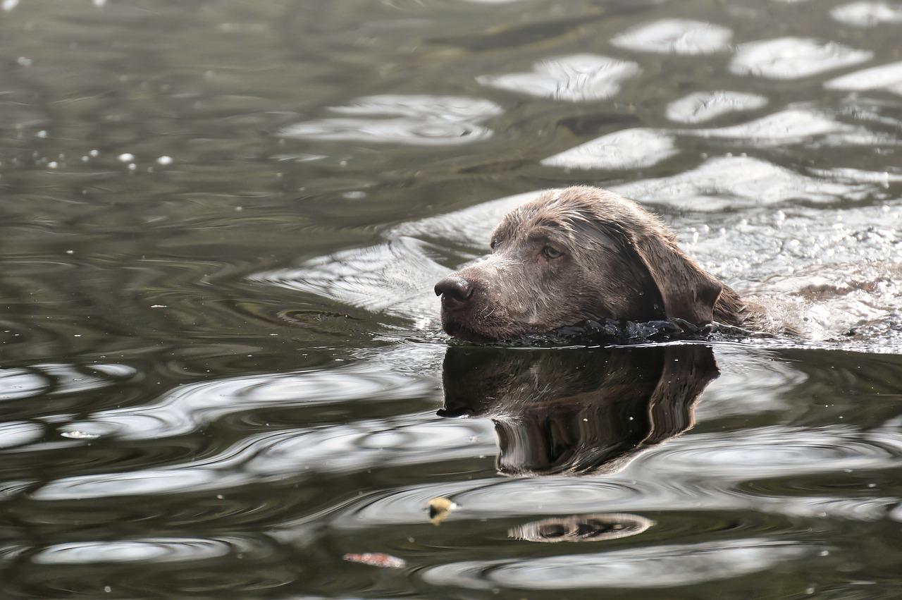 Cane che galleggia