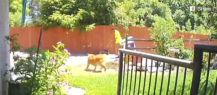 Cane che chiede aiuto al netturbino