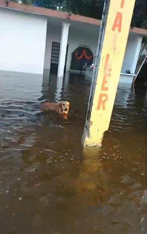 Cane perso nell'alluvione