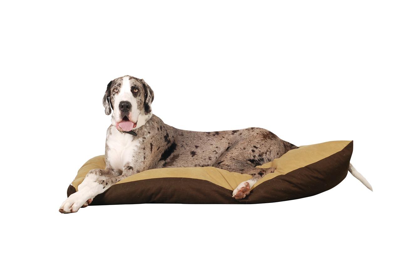 Il cucciolo sul materassino per riposare