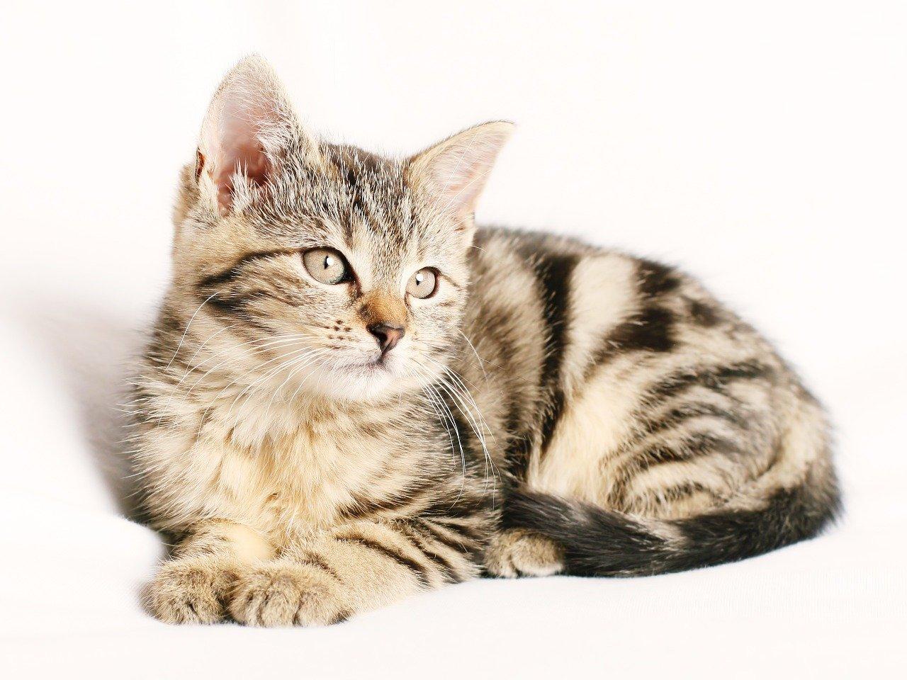 Gattino abbandonato in strada trova casa