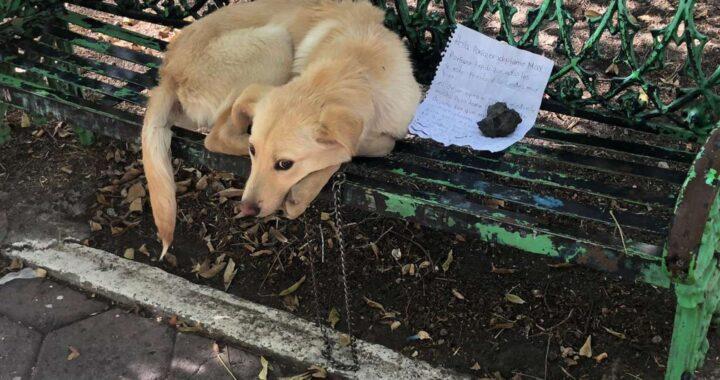 cucciolo abbandonato su una panchina