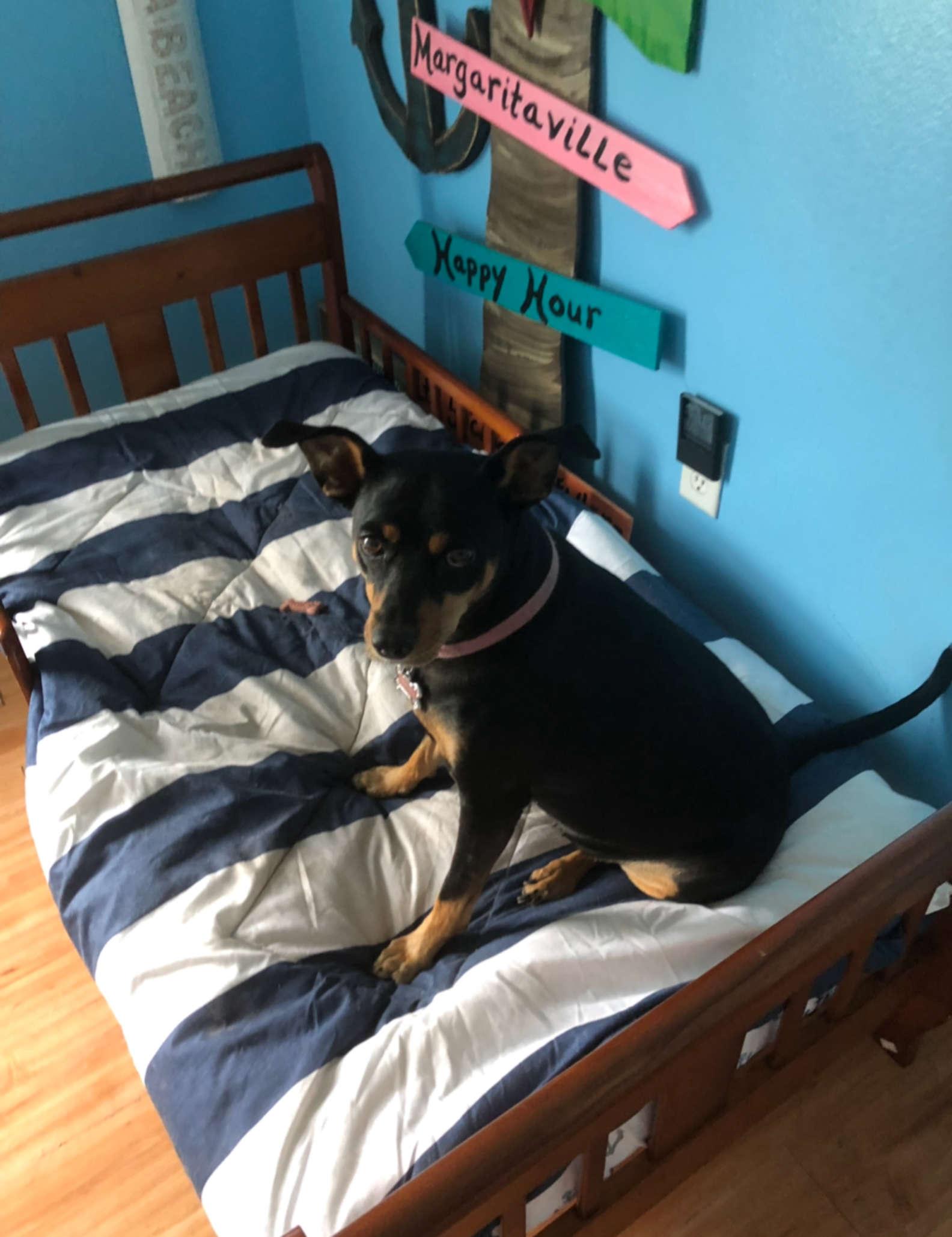 Cucciolo nel suo letto