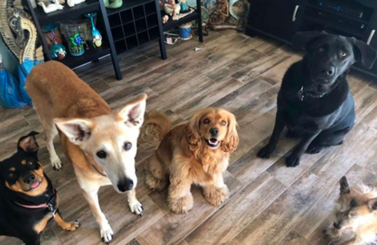 Famiglia con 7 cani