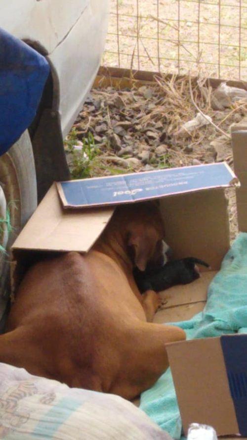 Cane senza una casa