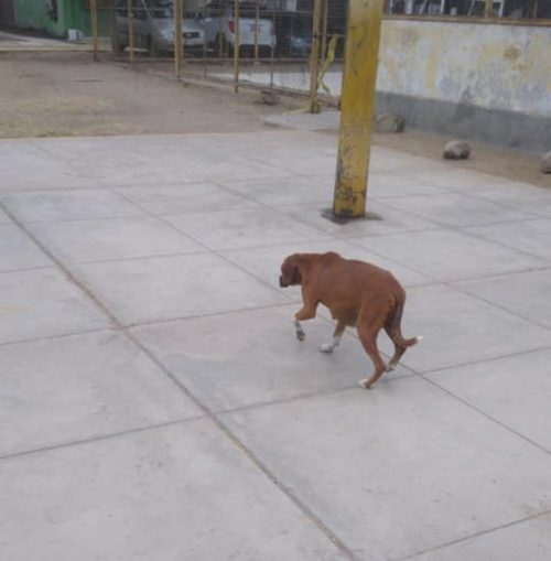 Cane che vive da solo
