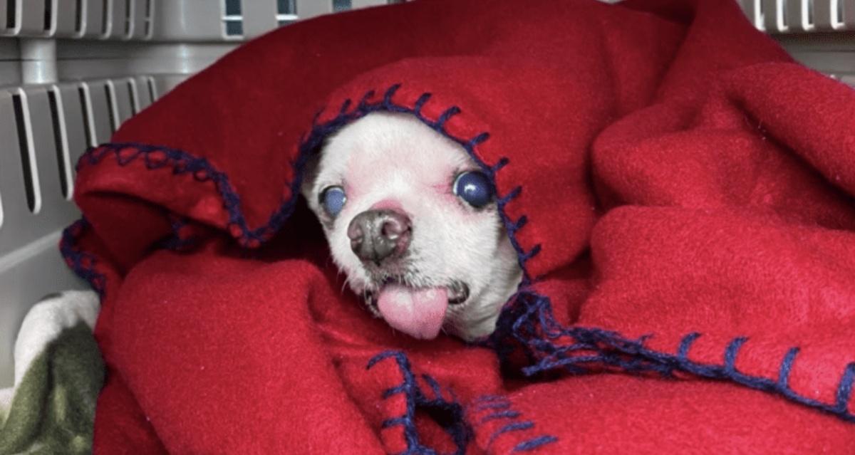 Il salvataggio dei 14 cani