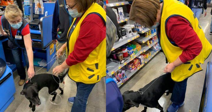 È entrata nel centro commerciale e ha iniziato a curiosare ovunque. Soltanto dopo si è scoperto quale fosse la missione della cagnolina