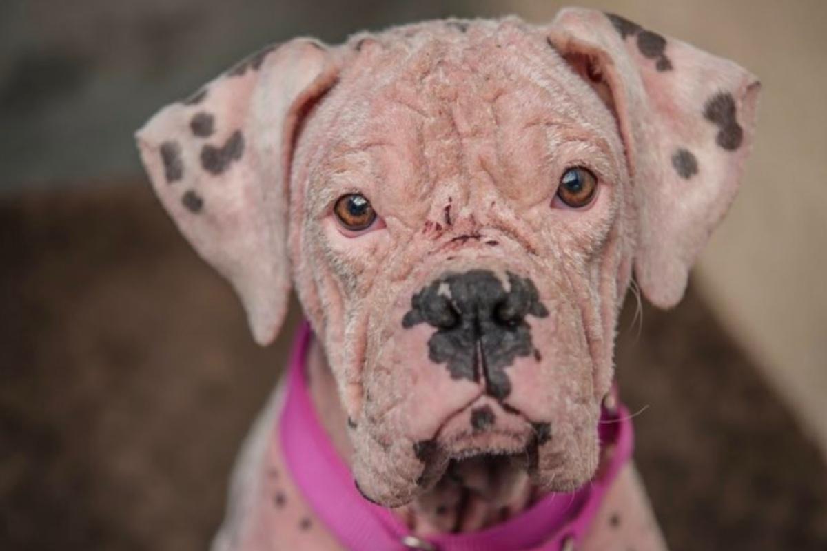Asia, la cagnolina rosa salvata dai volontari