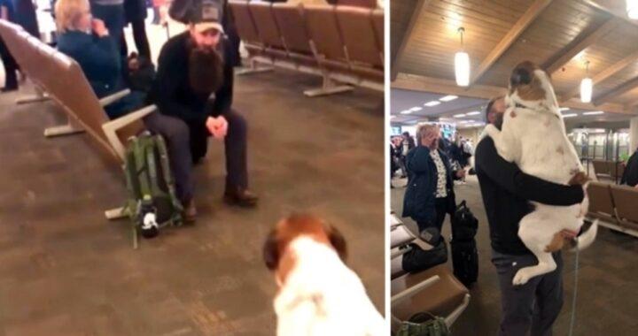 (VIDEO) Papà torna a casa dopo mesi con la barba incolta e si domanda se il suo cane lo riconoscerà: guardate cosa fa quando lo vede