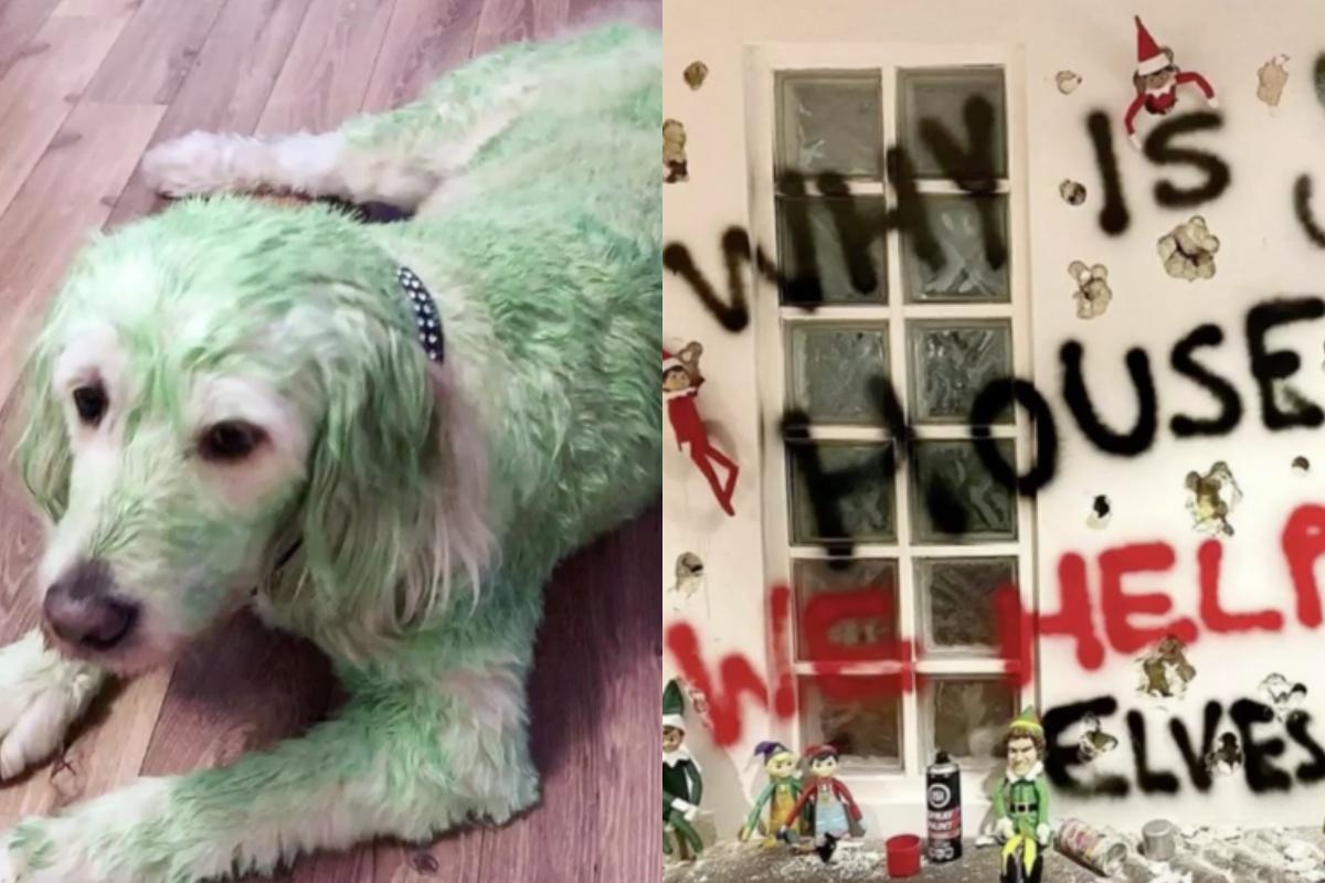 Donna dipinge il suo cane di verde