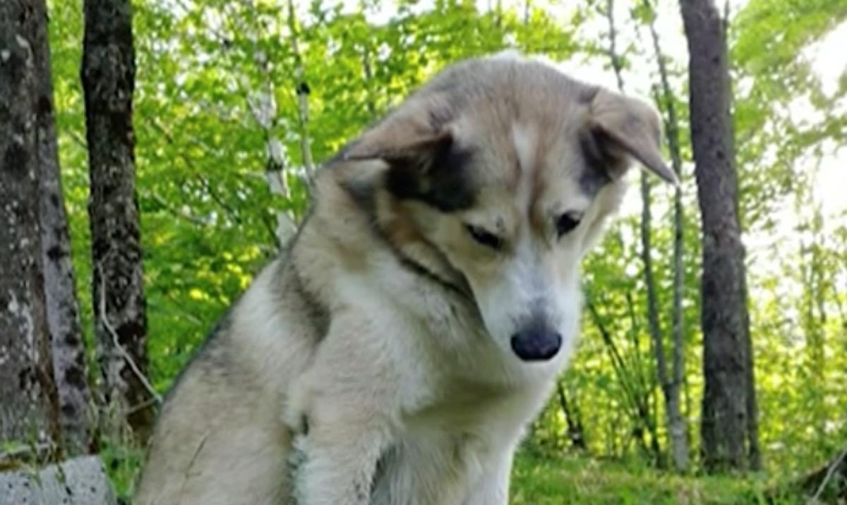 Cassidy, il cane ucciso da un cacciatore