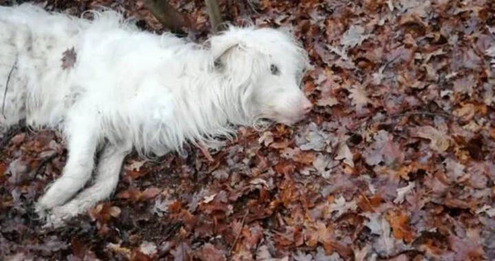 Vi ricordate Christmas? Il cane gettato nei boschi pochi giorni prima di Natale. Oggi è passato un anno e lo ritroviamo così