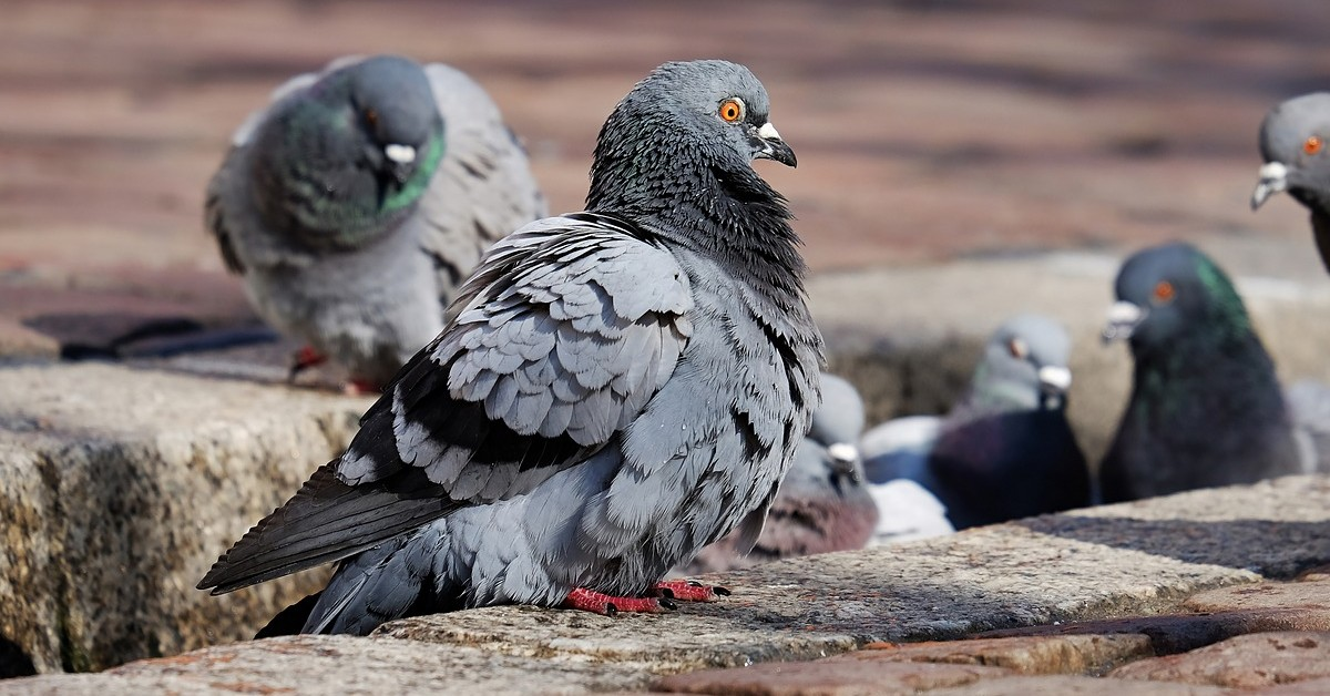 Come pulire il balcone dalla cacca di piccione