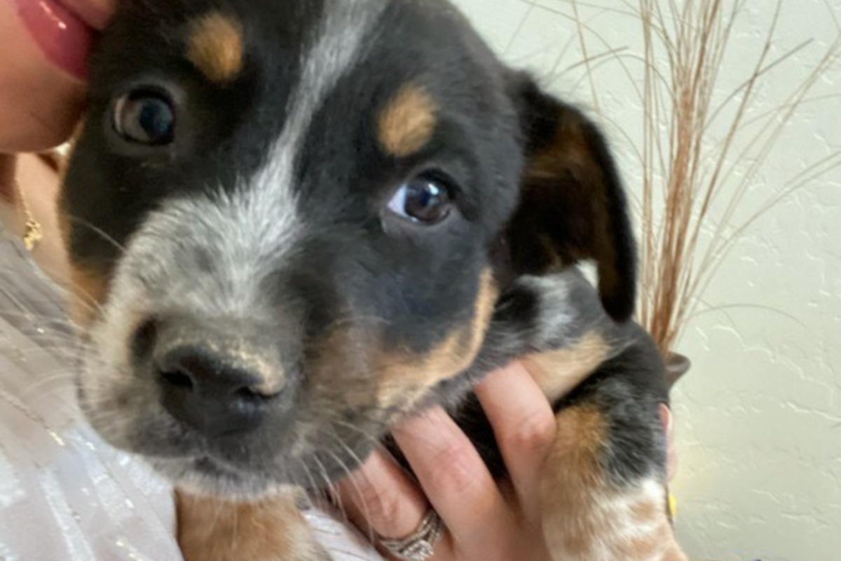 Polizia salva dei cuccioli abbandonati