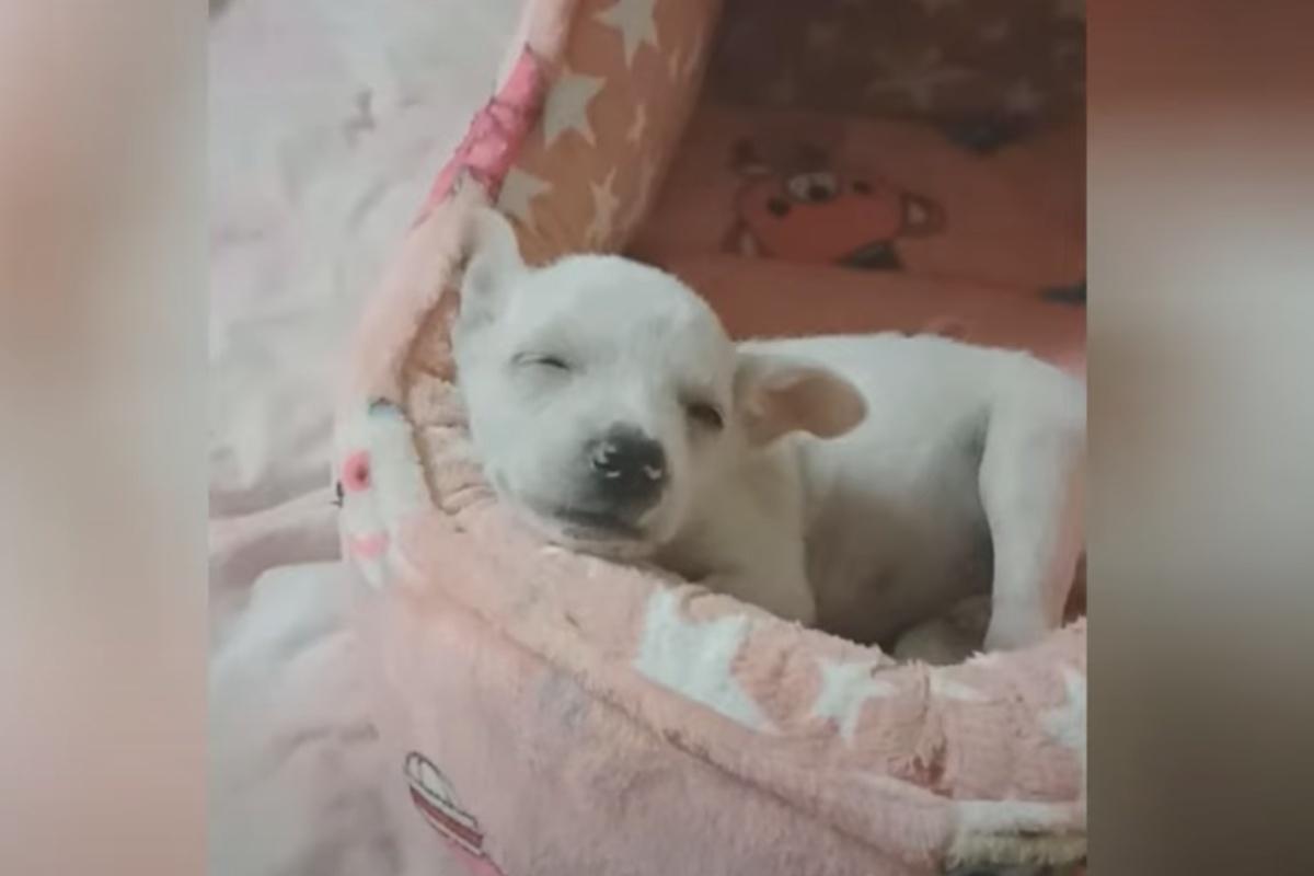 Quando lo hanno trovato, il cucciolo era ricoperto di pulci